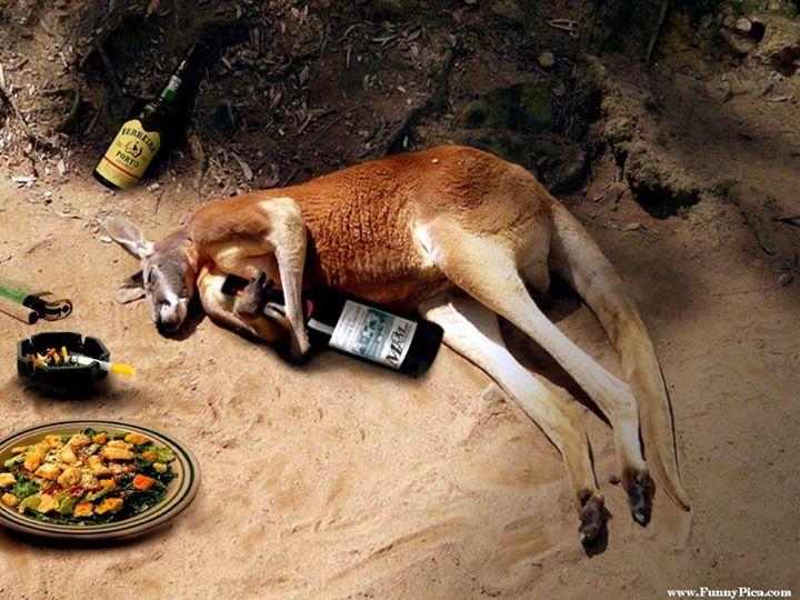 drunk-kangaroo